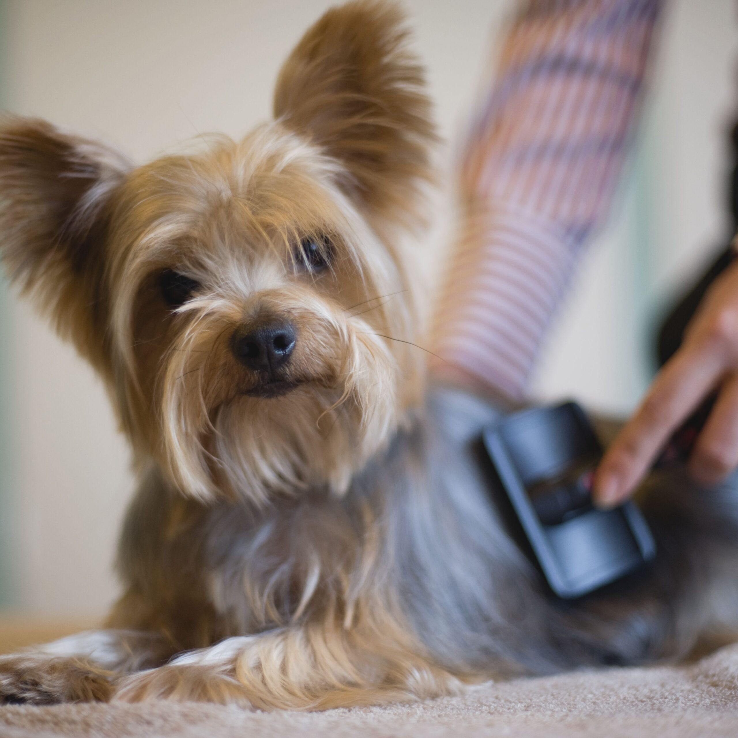Dog Hair Problems